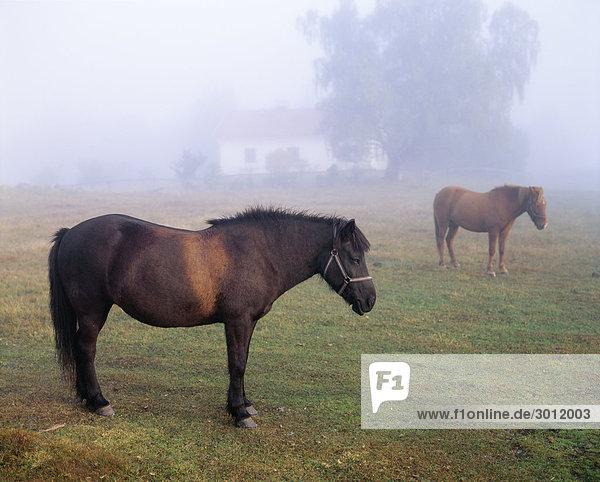 Pferde grasen auf Bauernhof