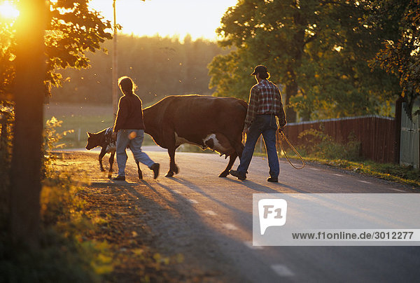 Mann und Frau mit Kühen auf Straße