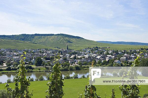 Blick über Mosel auf Leiwen  Rheinland-Pfalz  Deutschland