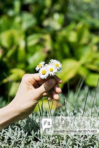 Frau Blume aufheben