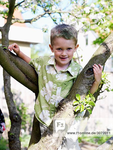 Junge - Person Baum Skane län klettern