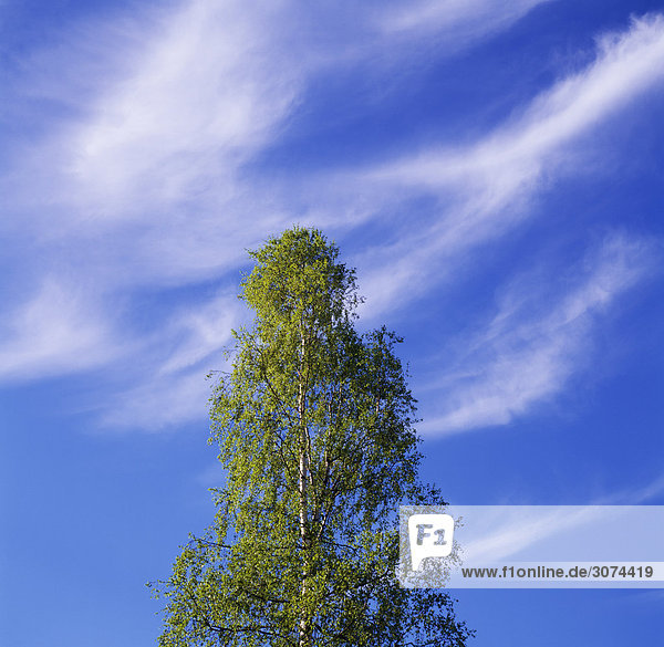 Baum gegen Himmel Untersicht