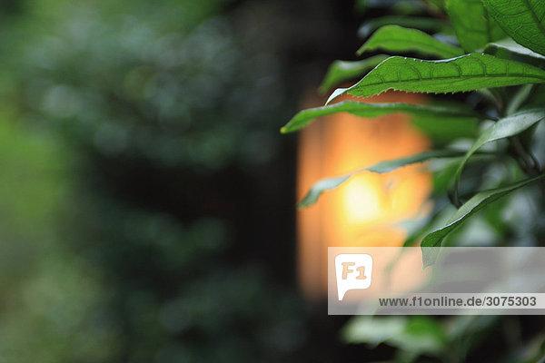 Licht Leuchte leuchtenden