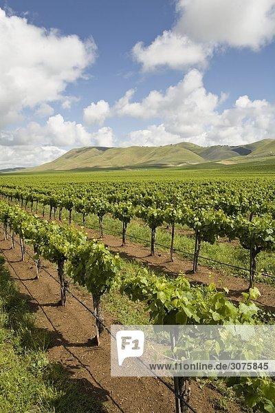 Weinbau Landschaften