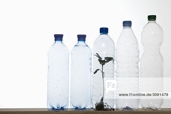 A row of plastic water bottles with a seedling in one of the bottles