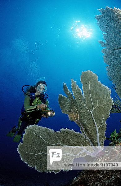 Scuba diver in coral reef  Punta Cana  Dominican Republic  Caribbean Sea  underwater shot