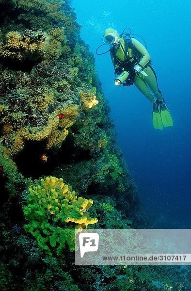 Taucher an Steilwand  Kroatien  Mittelmeer  Unterwasseraufnahme