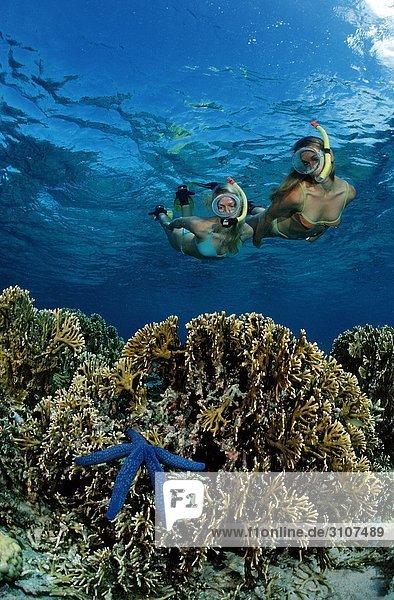 Zwei schnorchelnde Frauen entdecken blauen Seestern (Asteroidea) auf Korallenriff  Bali  Indischer Ozean  Unterwasseraufnahme