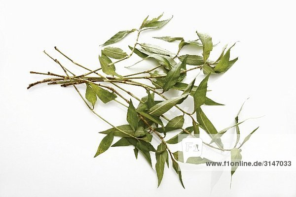Praew Blätter (vietnamesischer Koriander)