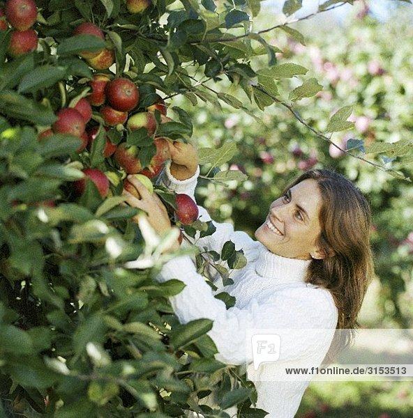 Frau pflückt Äpfel vom Baum