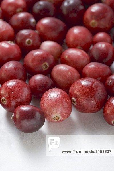 Viele Cranberries (Close Up)