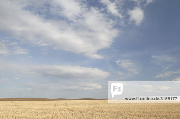 Crop stubble under a big sky near Kindersley  Saskatchewan
