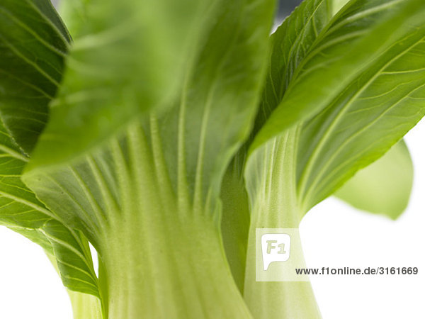 One bunch of Pak Choi