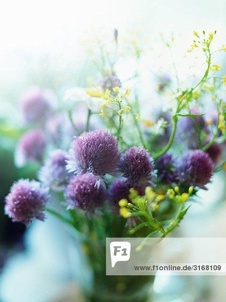 Blumen in einer Vase  Schweden.
