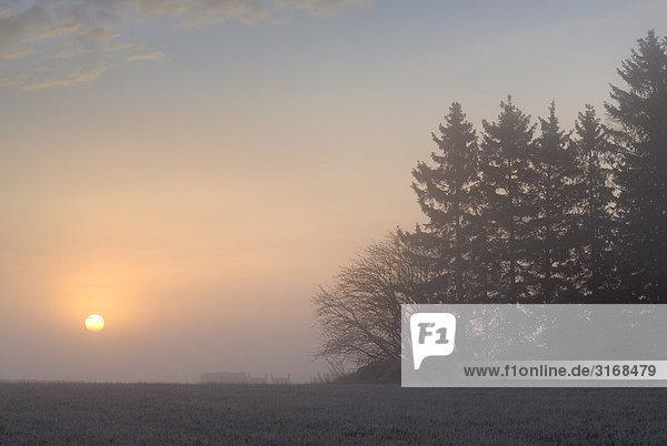 Den Sonnenaufgang im Winter.