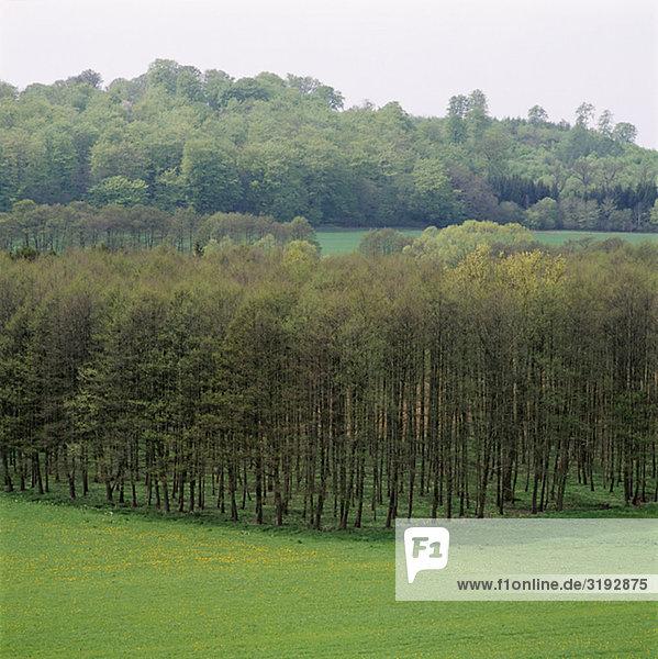 Bäume auf Feld  erhöhte Ansicht