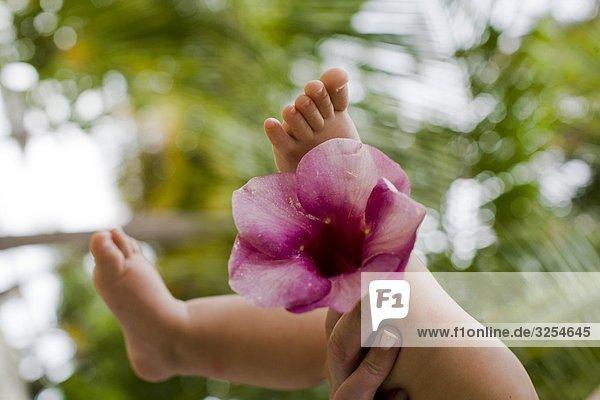A baby ¥ s Beine und Blume  Nahaufnahme  den Malediven.