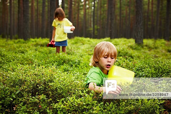 Siblings picking bluberrys in the forest