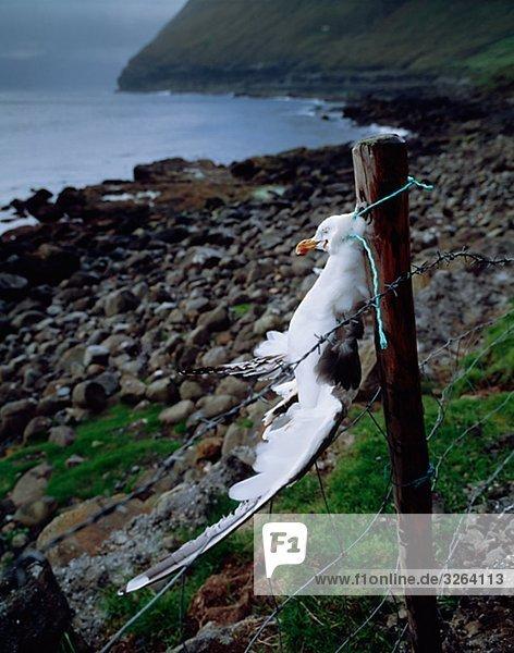 A scarecrow by the coast  the Faeroe Islands.