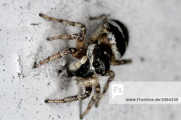 Eine Spinne,  Nahaufnahme.
