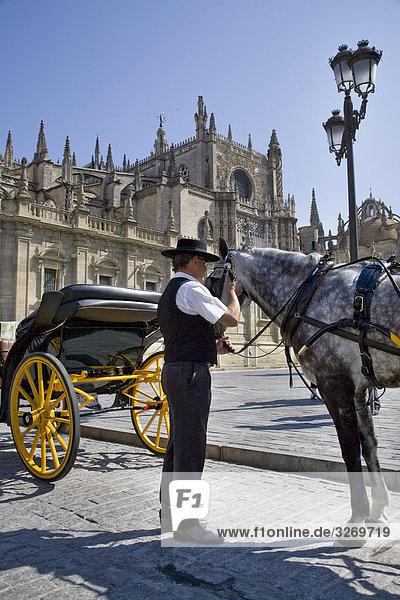 Mann Stand in der Nähe eines Pferdes  Kathedrale von Sevilla  Sevilla  Spanien  Patrimonio De La Humanidad