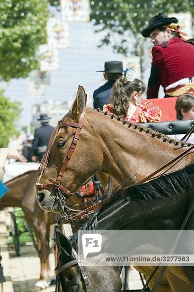 Pferde in eine Messe  Feria  Sevilla  Spanien