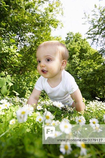 Junge in den Gänseblümchen