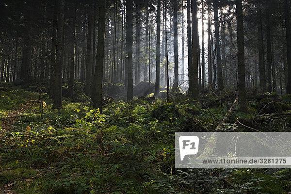 Schwarzwald  Baden-Württemberg  Deutschland Schwarzwald, Baden-Württemberg, Deutschland