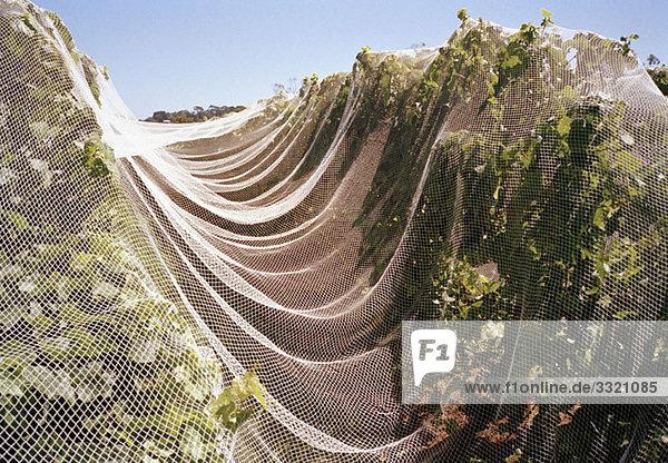 Ein Netz  das Obstbäume in einem Obstgarten bedeckt. Ein Netz, das Obstbäume in einem Obstgarten bedeckt.
