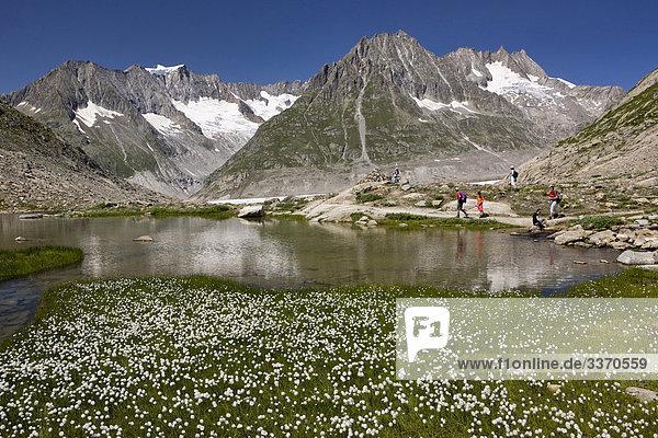 10873851  Switzerland  swiss  mountain lake  Aletsch glacier  lake  canton Valais  cotton grass  rock  persons  walking  hiking  group  mountains  meadow  nature  scenery