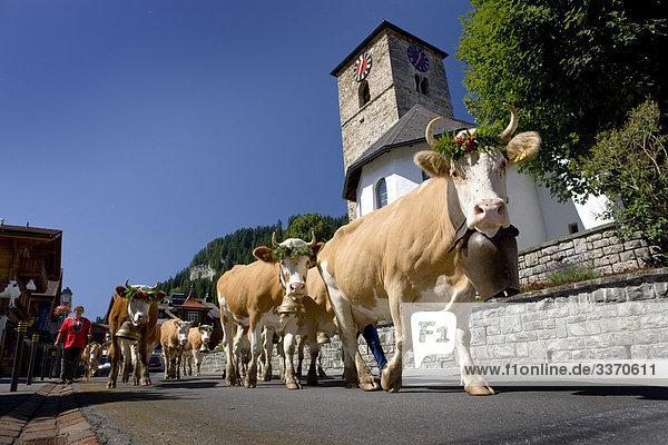 Hausrind Hausrinder Kuh Tradition Wohnhaus Gebäude Straße Dorf Berner Oberland Kanton Bern Platz schweizerisch Schweiz