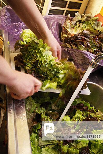 Waschen des Salat in der Spüle