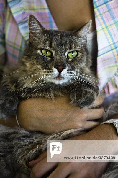 Kuscheln mit Katze