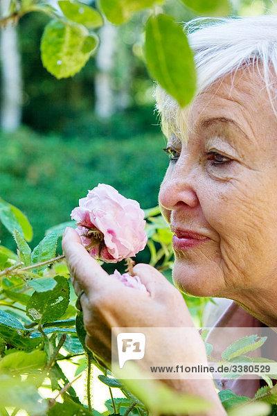 Seniorin schnuppert an Rose Seniorin schnuppert an Rose