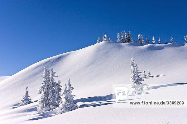 Winterlandschaft am Schneeberg  Mühlbach am Hochkönig  Österreich
