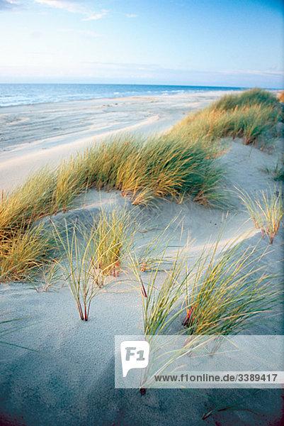 Der Strand am Meer  Dänemark.