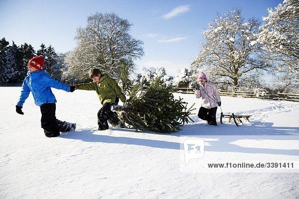 Kinder ziehen Weihnachtsbaum im Schnee