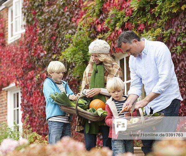 Familienpflücken von Saisongemüse