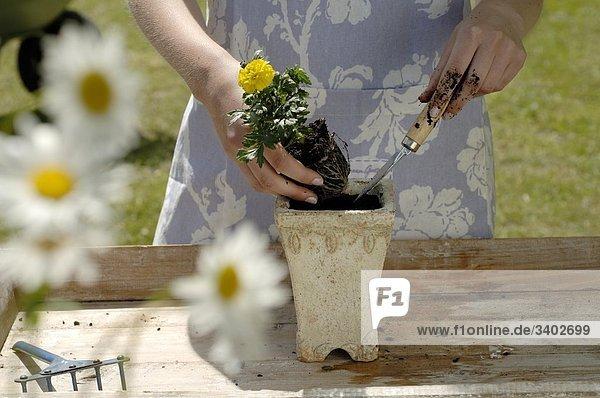 Frau pflanzt Blume ein
