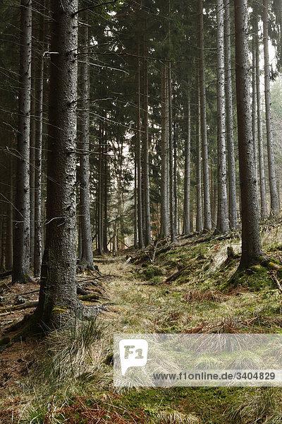 Waldlandschaft im Taunus  Hessen  Deutschland Waldlandschaft im Taunus, Hessen, Deutschland