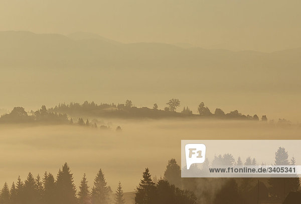 Landschaft im Nebel in Karpaten in der ukraine