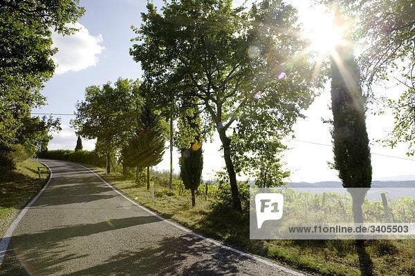 leere von Bäumen gesäumt Road in Italien