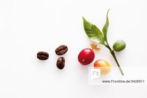 Kaffeebohnen und Blätter  erhöhte Ansicht