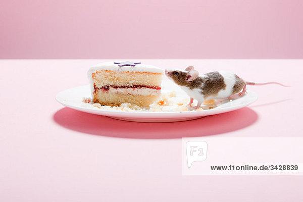 Maus und Kuchenscheibe auf dem Teller
