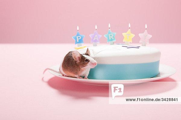 Maus mit Partykuchen