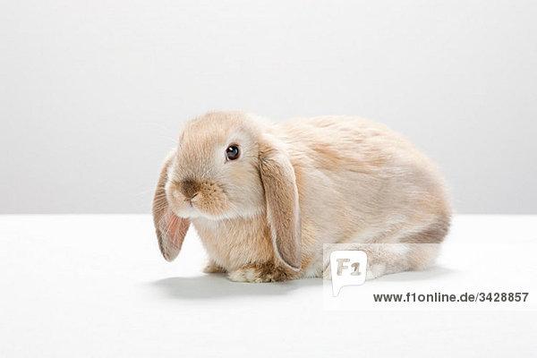 Portrait eines Kaninchens
