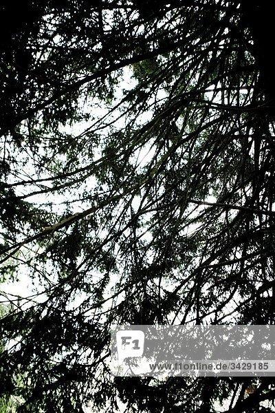 Untersicht der Zweige des Baumes