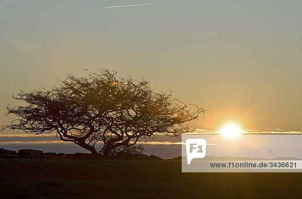 Sunrise und Baum  OLAND