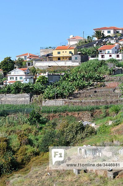 Portugal  Madeira  View of houses and plantation