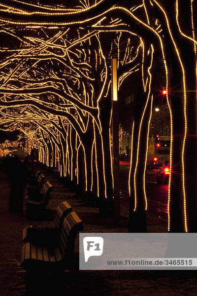 Mit Licht geschmückte Bäume  Unter Den Linden  Berlin  Deutschland